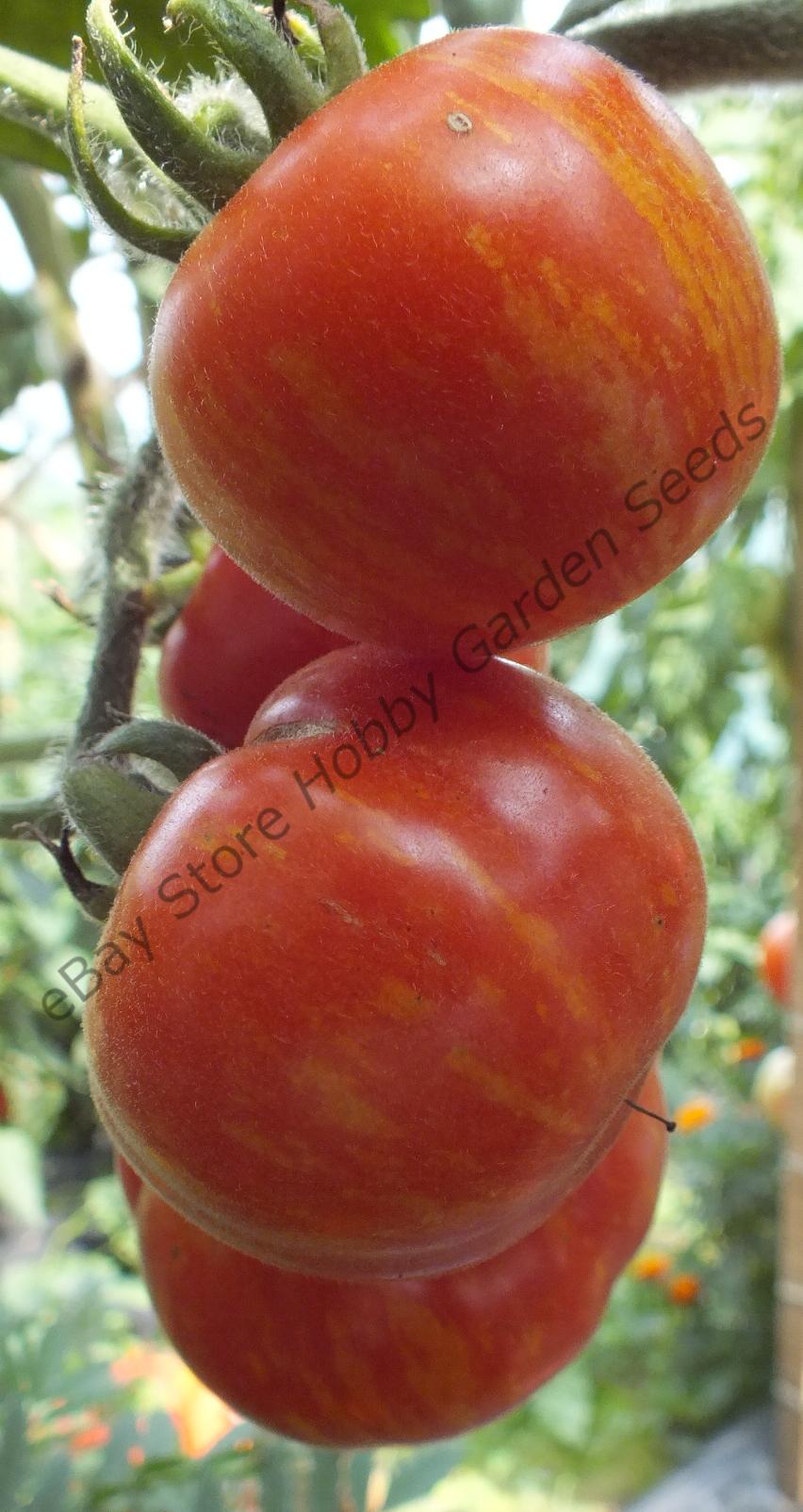 Red tomatoes : ELBERTA PEACH Tomato