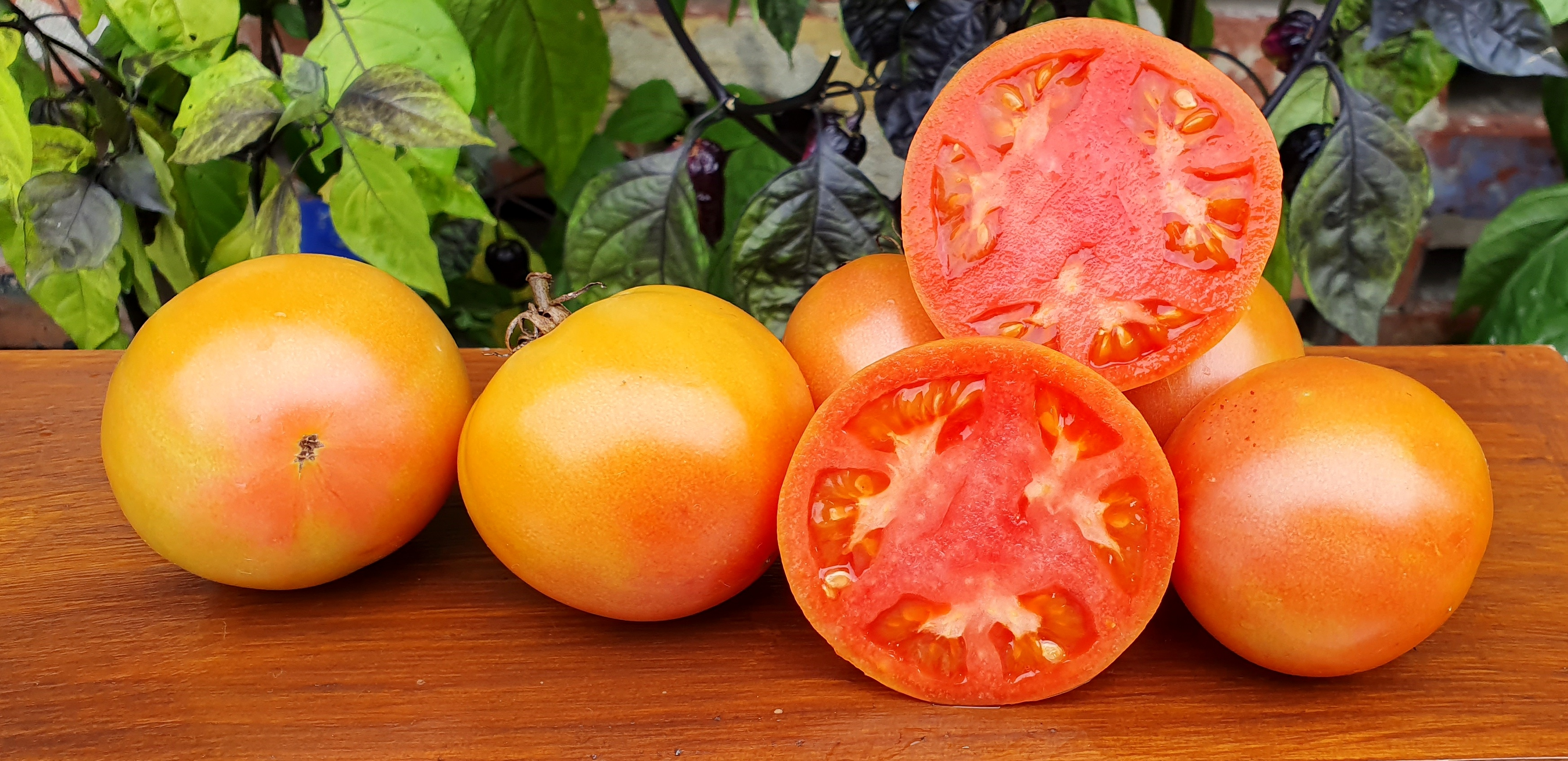 Yellow Tomatoes: REVEREND MORROW'S LONG KEEPER Tomato